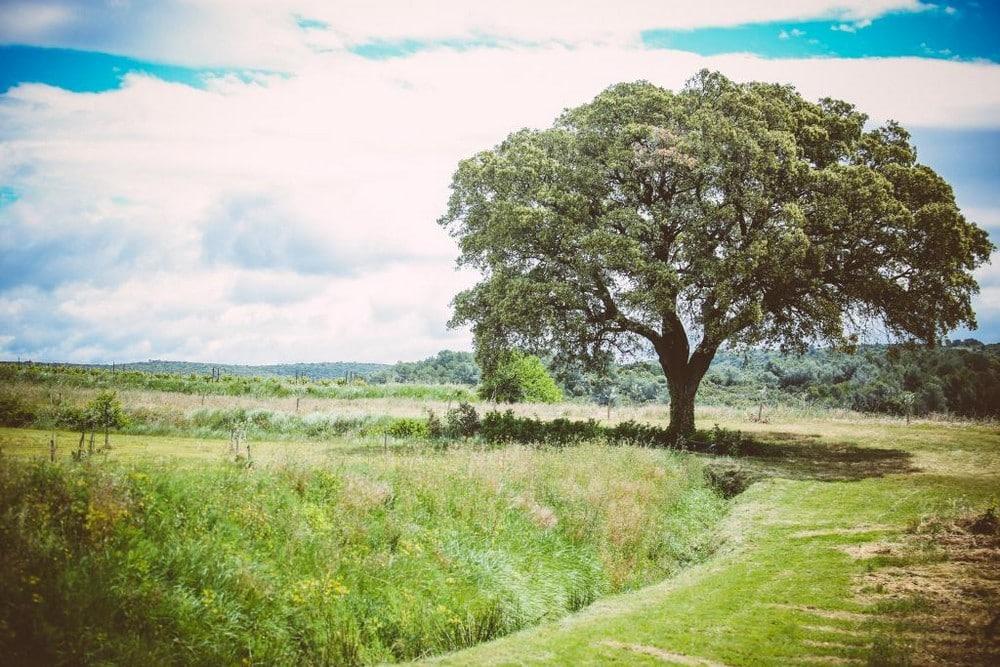 le chêne Domaine de Salente